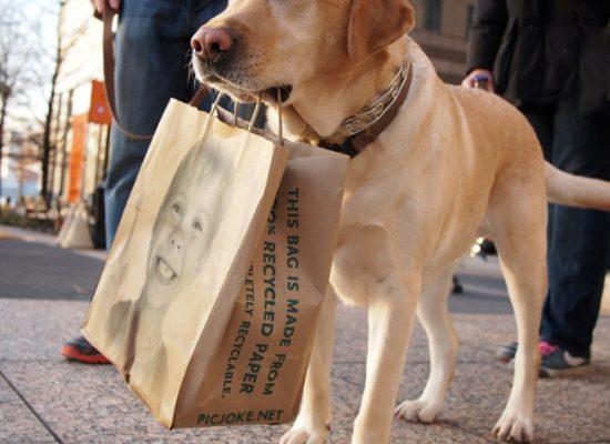 El Perro y el Carnicero - Llamadadepoder.com