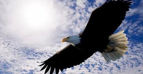 El pato que decidió ser águila - Llamada de Poder