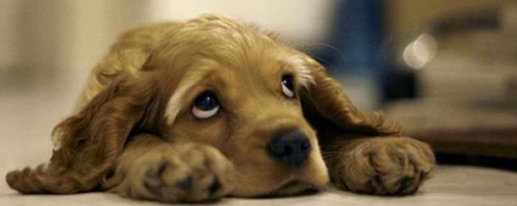 El Llanto del Perro